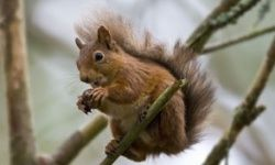 This little guy has the right idea by eating nuts.