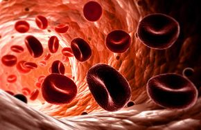 These red blood cells may be bound for the coronary arteries if the heart has anything to say about it. See more heart pictures.