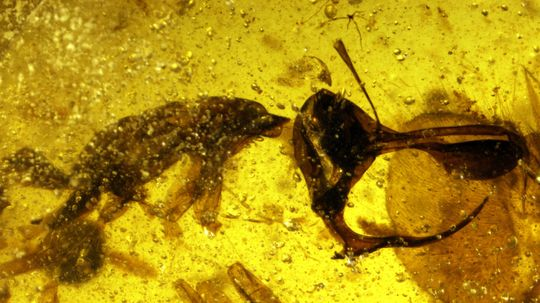 Prehistoric 'Hell Ant' Sported Metal Spike for Sucking Blood