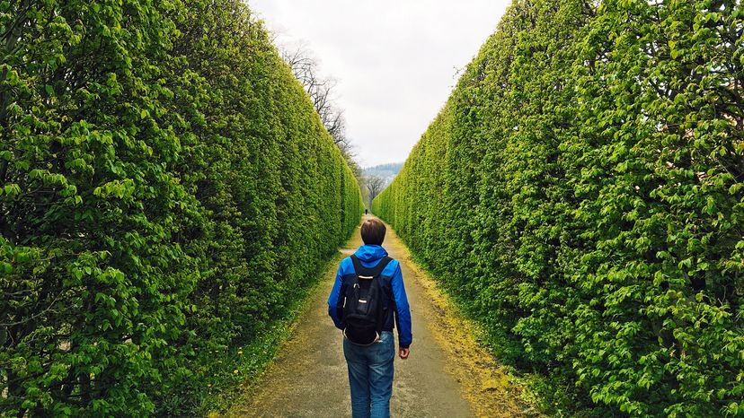 Man in a green hedge maze