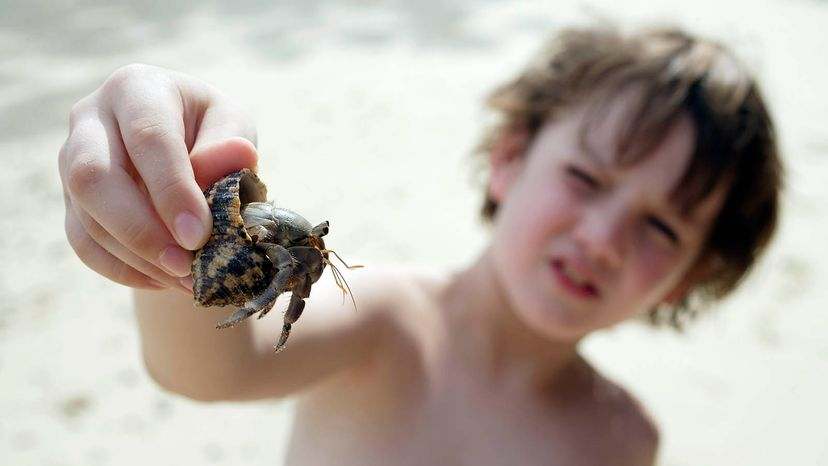 boy with hermit crab