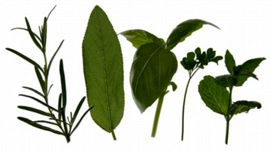 Herb Questions