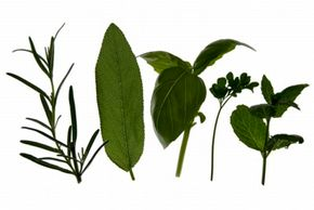 Use fresh herbs when possible to get the best flavor. See more culinary herb pictures.