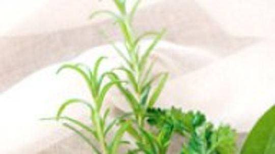 5 Superb Herbs