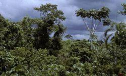 The Amazonas region of Peru, where Yumbilla Falls is located.