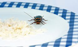 Kitchen sinks and dishwashers are attractive to cockroaches, as are any spots with traces of food particles.