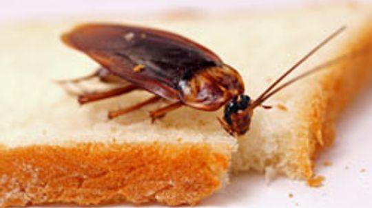 10 Cockroach Hiding Spaces