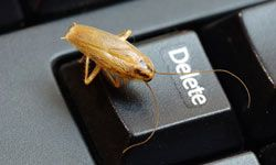 Cockroaches can jump out from behind books on shelves, from underneath or inside of electronics and light fixtures, and from on top of knick-knacks and candles.