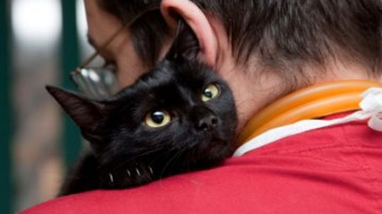 Home Remedies for Cats