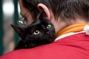 Knowing how to take care of your cat at home will help your kitten grow to be an adult. See more pictures of cats.