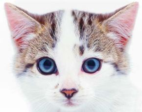 Your cat's eyes can tell you a lot about his health.