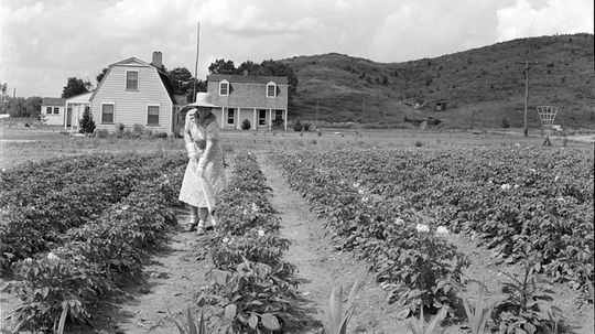Free Land: How the Homestead Act Helped America Expand Westward