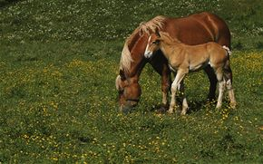 Younger horses have a better chance of full recovery after breaking a leg.