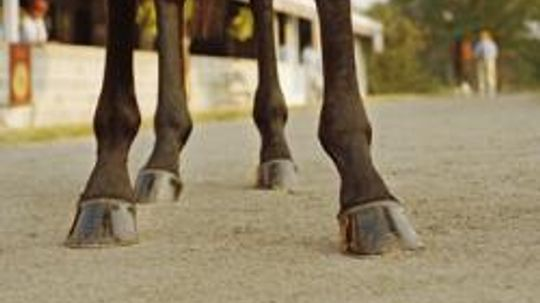 How to Gallop on a Horse