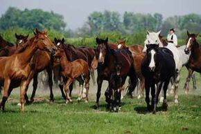 Horses are majestic animals, but they frequently suffer from serious health issues if not properly cared for.