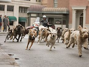 """Some of the residents of the """"Hotel for Dogs"""" make a run for it after the police discover their lair."""