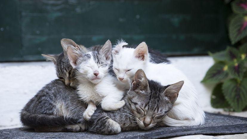 tabby cats in Greece