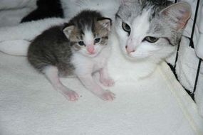 For the first few weeks of their lives, kittens get stimulation from their mother in order to eliminate.