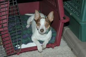 The first step to crate training your dog is letting him get used to the crate.