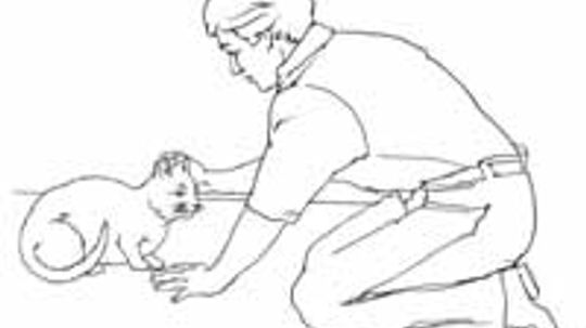 How to Approach an Injured Cat