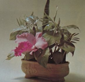Foliage plants grow orchids? Yes, with a water pick.