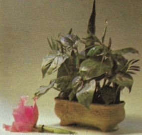 An orchid in a water pick.