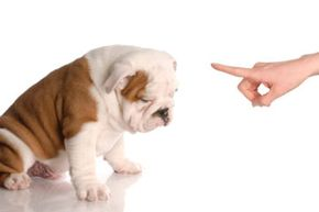 You're going to need more than a pointed finger and a stern look to properly train your dog. See more dog pictures.
