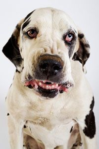 Clicker training has helped many aggressive dogs change their behavior.