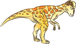 Its all-over spots make Pachycephalosaurus a cool dinosaur to draw. See more dinosaur pictures.