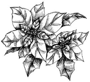Flower Image Gallery Learn how to draw a poinsettia and other flowers and plants with our simple instructions. See more pictures of flowers.