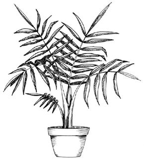 Flower Image Gallery Learn how to draw a palm and other flowers and plants with our step-by-step instructions. See more pictures of flowers.