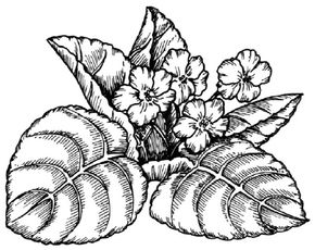 Violet Image Gallery You can learn to draw this violet. See more pictures of flowers.