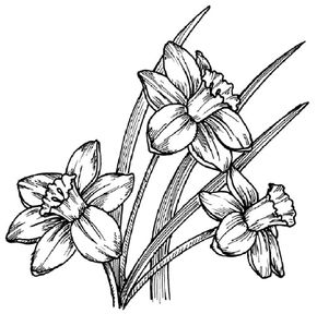 Flower Image Gallery Learn how to draw this daffodil. See more pictures of flowers.