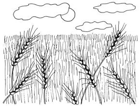 Publications International, Ltd. Slender stalks of wheat sway in the wind and in the sunshine. Learn to draw this landscape in just four simple steps.
