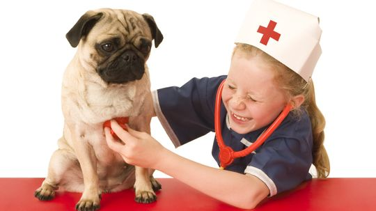 How to Give First Aid to Your Dog