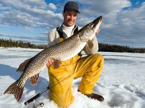 Man ice fishing holding a Northern Pike, Wawa, Ontario