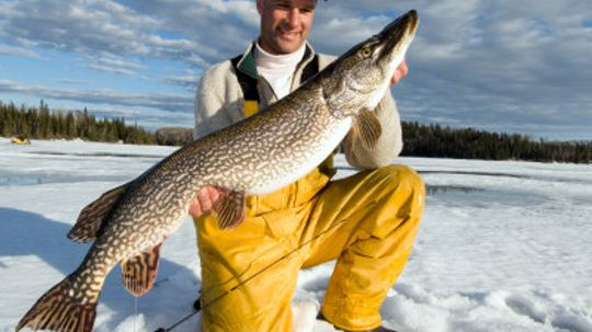 How to Hold a Pike
