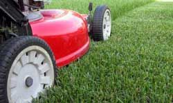 Grass allergies? You have an excuse to let someone else cut the yard.