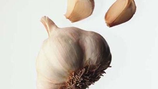 Garlic Questions