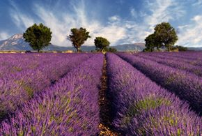 Can you smell the Provençal lavender already? If your dream is to move to France and write a novel, having that clear vision can inspire you to follow through with your plans.