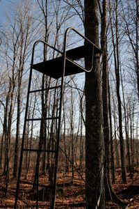 A ladder tree stand.