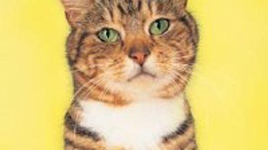 How to Solve Cat Behavior Problems