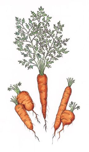 Planting several varieties of the same vegetable is a good way to pace your harvest.
