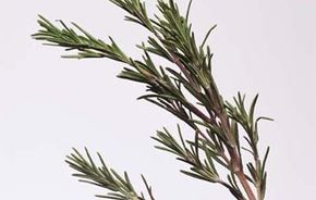 Herbs like rosemary are an excellent choice to infuseinto vinegar for marinating your favorite meats.