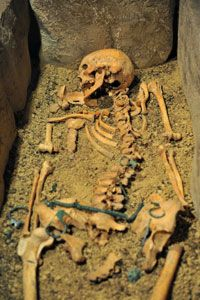 Bones and other human remains are often the most important evidence for the theories that bioarchaeologists construct.