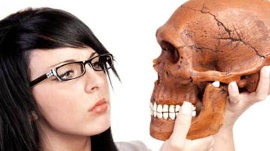 How do humans evolve?