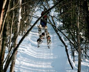 2007 Iditarod rookie, Norwegian Segrid Ekran, runs her team through a practice trail in Wasilla, Alaska.