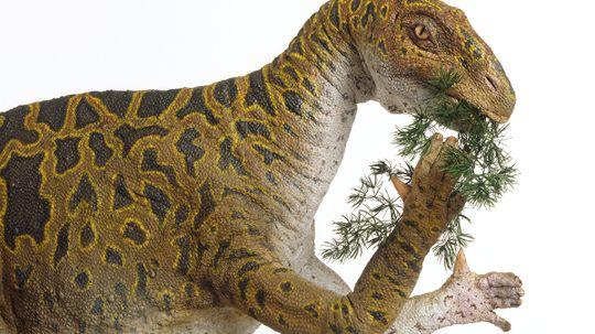 Were iguanodon's thumbs murder weapons?