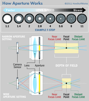 Fast lenses have really big maximum apertures that let a lot of light pour into a camera. A wide maximum aperture also narrows depth of field, a characteristic you can put to many creative uses.