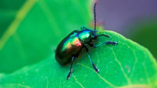 10 Prevention and Maintenance Tips for Insects